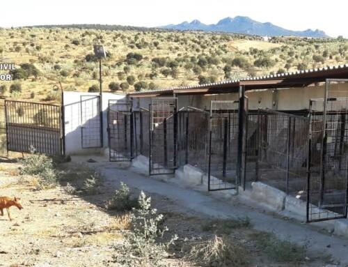 Investigado el propietario y al cuidador de una reala de Puebla de la Reina por un delito de abandono con resultado de la muerte de una veintena de sus perros.