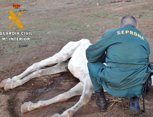 La Guardia Civil investigó a un vecino de Zafra por un delito de maltrato animal con resultado de muerte.