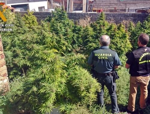 Actuaciones de la Guardia Civil contra el cultivo y tráfico de drogas en varias localidades pacenses